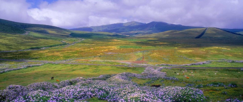 Surnommée l'île rose pour ses azalées et hortensias, Flores possède une des végétations les plus extraordinaires de l'archipel des Açores