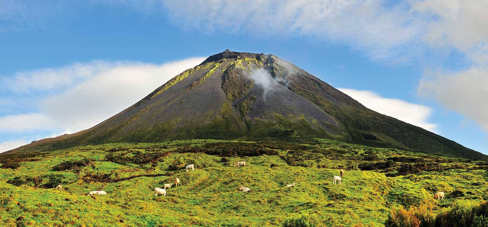 Excursion Tour de l'île de Pico, Açores